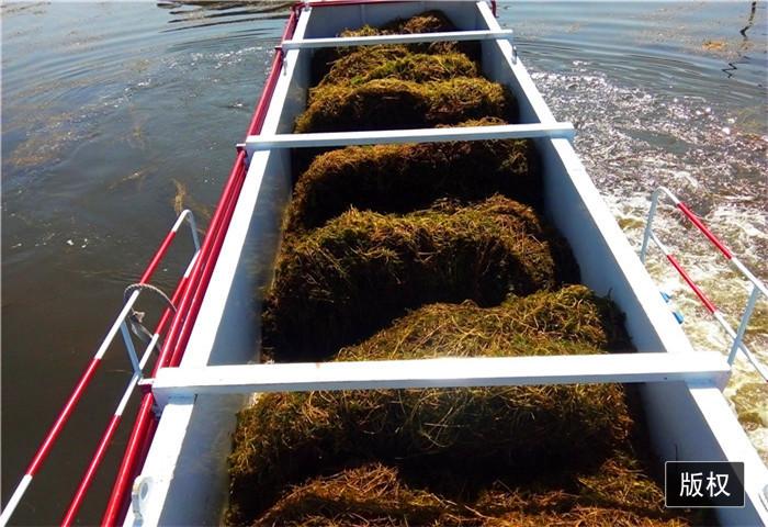 水葫芦收割船